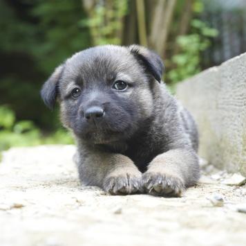 Щенки от небольшой собаки - Собаки в добрые руки