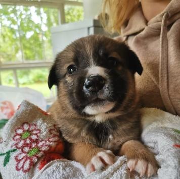 Рофель - Собаки в добрые руки