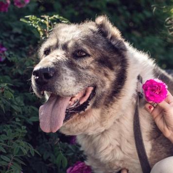 Мирхан - Собаки в добрые руки