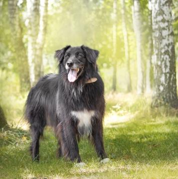 Пушэн - Собаки в добрые руки