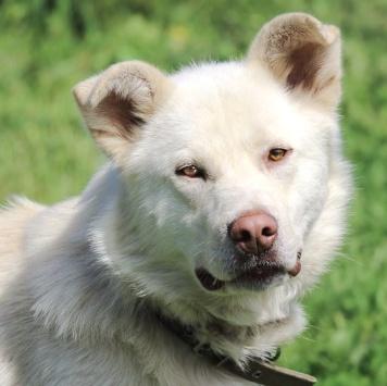 Ландыш - Собаки в добрые руки