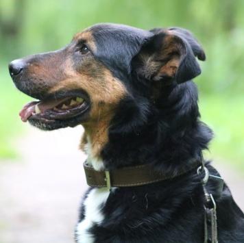 Ральф - Собаки в добрые руки