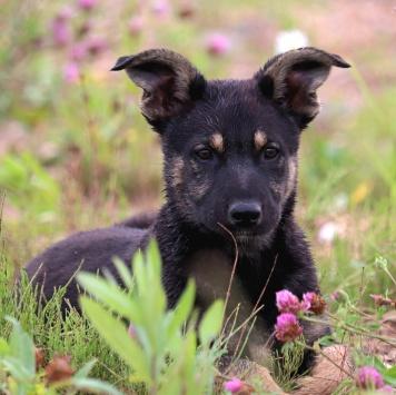 Блэки - Собаки в добрые руки