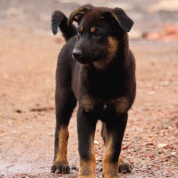 Ванесса - Собаки в добрые руки