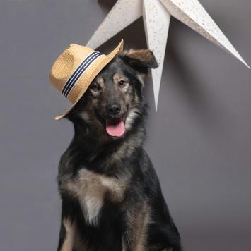 Любомир - Собаки в добрые руки