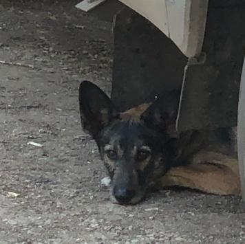Добрая собака - Найденные собаки
