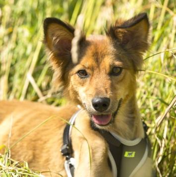 Зума - Собаки в добрые руки