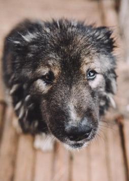 Тирион Ланнистер - Собаки в добрые руки