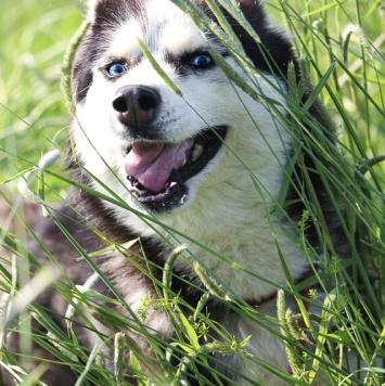 Софа - Собаки в добрые руки