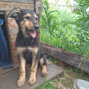 Юми - Собаки в добрые руки