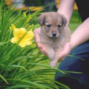 Лия - Собаки в добрые руки