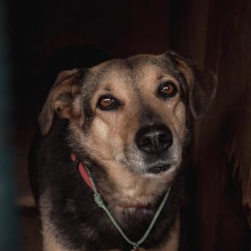 Лизочка - Собаки в добрые руки
