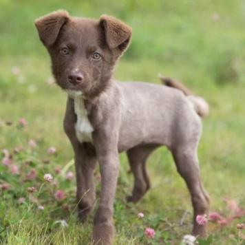 Сигма - Собаки в добрые руки