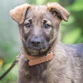 Груня - Собаки в добрые руки