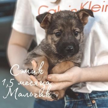 Сэмик - Собаки в добрые руки