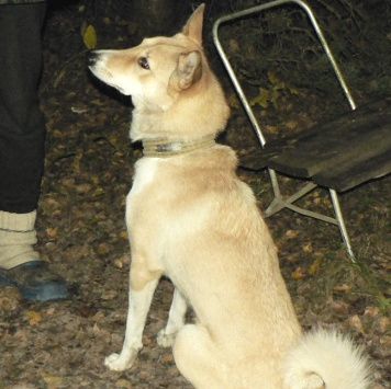Лача - Пропавшие собаки