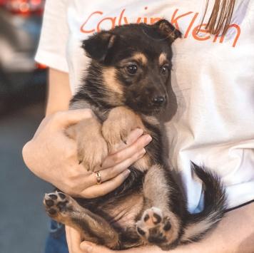 Роуз - Собаки в добрые руки