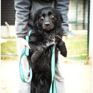 Бастион - Собаки в добрые руки