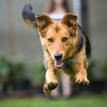 Шелл - Собаки в добрые руки
