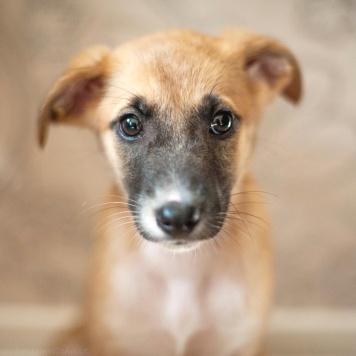 Мусенька - Собаки в добрые руки