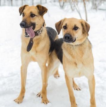 Том и Джерри - Собаки в добрые руки