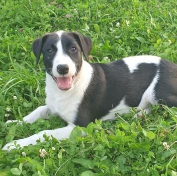 Херц - Собаки в добрые руки
