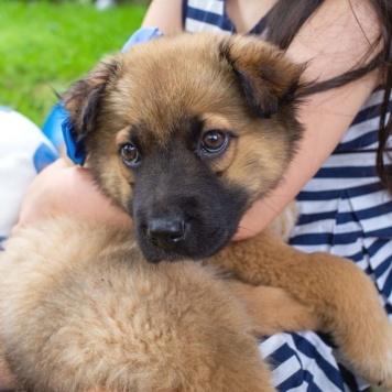 Мишаня и Шанелька - Собаки в добрые руки