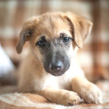 Лиззи - Собаки в добрые руки