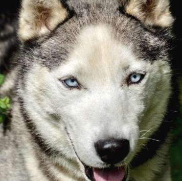 Крош - Найденные собаки