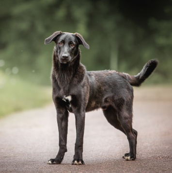 Римус - Собаки в добрые руки