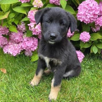 Лоня - Собаки в добрые руки