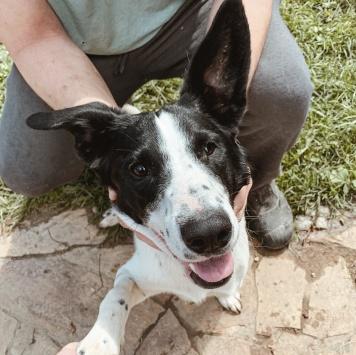 Снуппи - Собаки в добрые руки