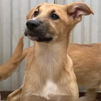 Санса - Собаки в добрые руки
