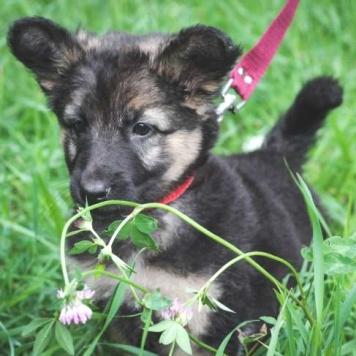 Чили - Собаки в добрые руки
