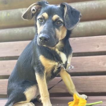 Фелис - Найденные собаки