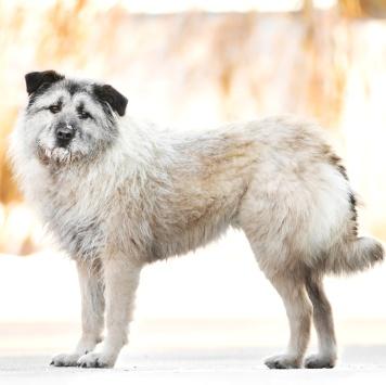 Марла - Собаки в добрые руки