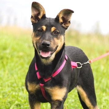 Тучка - Собаки в добрые руки