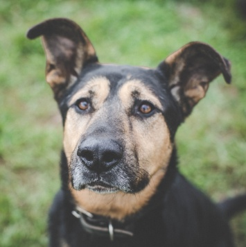 Веня - Собаки в добрые руки