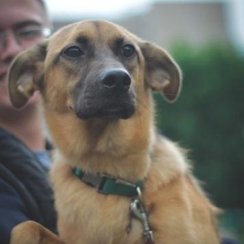 Джульета - Собаки в добрые руки