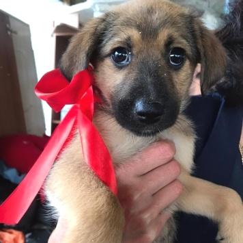 Шарли - Собаки в добрые руки