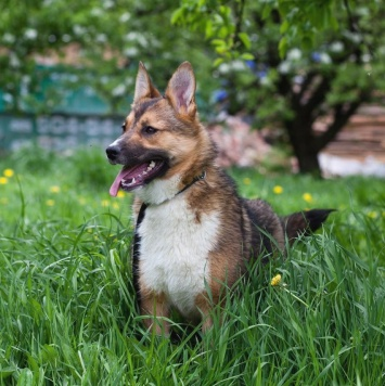 Марго/Маргоша - Собаки в добрые руки