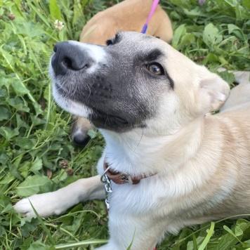 Рика (Рика-черника) - Собаки в добрые руки