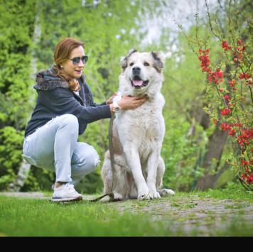 Симба - Собаки в добрые руки