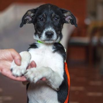 Ласточка - Собаки в добрые руки