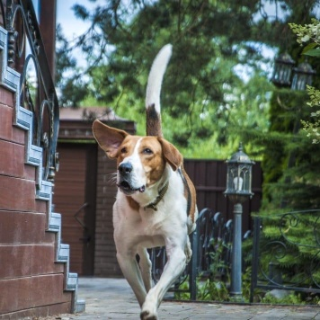 Ронни - Собаки в добрые руки