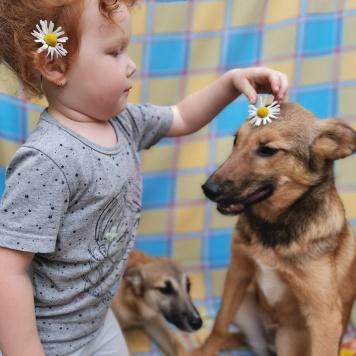 Щенуля - Собаки в добрые руки