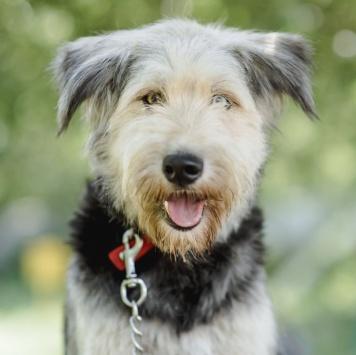 Санта-Луна - Собаки в добрые руки
