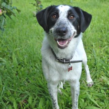 Вэлта - Собаки в добрые руки