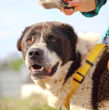 Ратмир - Собаки в добрые руки