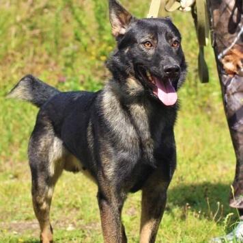 Фауст - Собаки в добрые руки